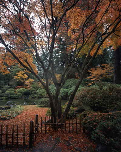Fall in the Japanese Garden OR